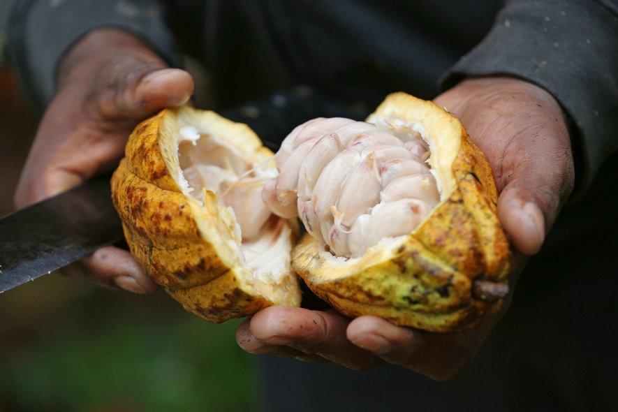 Cacao aan de Kade