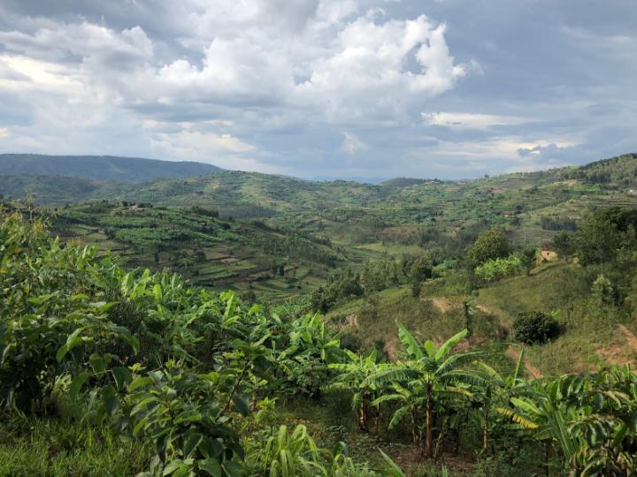 Column Thomas Klaphake: Rwanda, koffieparel in de maak