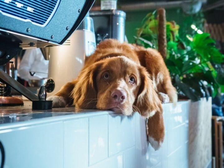 Koffie met een kwispel: vier honden met een échte hondenbaan