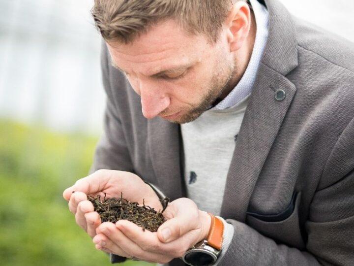 Nederlandse theekweker LocalTea haalt 1.5 miljoen euro op bij Dragon's Den