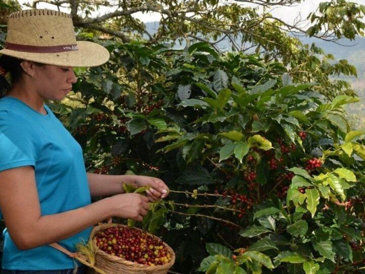 Maak virtueel kennis met koffieproducenten uit Centraal-Amerika