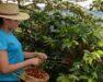 koffieproducenten uit Centraal-Amerika